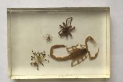 Assorted arachnids - dorsal view (2018)