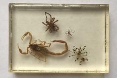 Assorted arachnids - ventral view (2018)