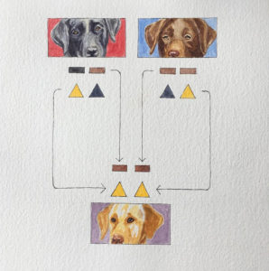 Watercolor image of yellow labrador with brown and black labrador parents